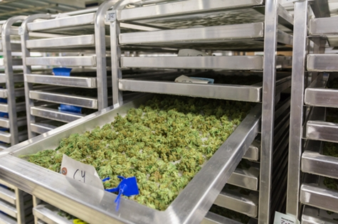 Food Safety Solutions for Edible Cannabis
