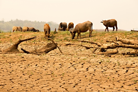 Climate Change Plans on Food Safety
