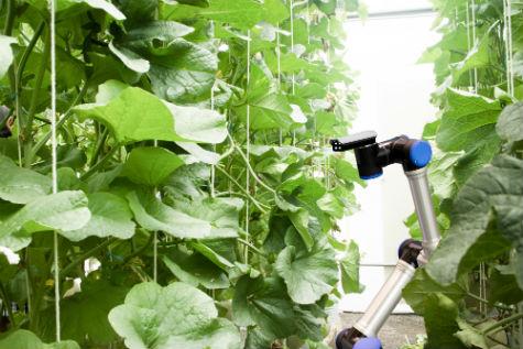 vertical farming website