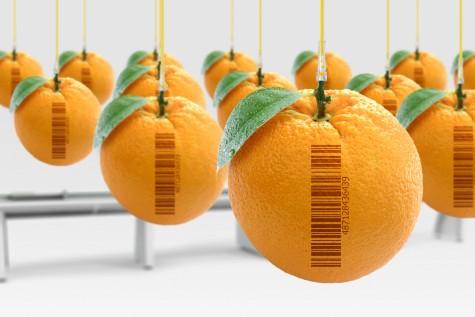 oranges blog